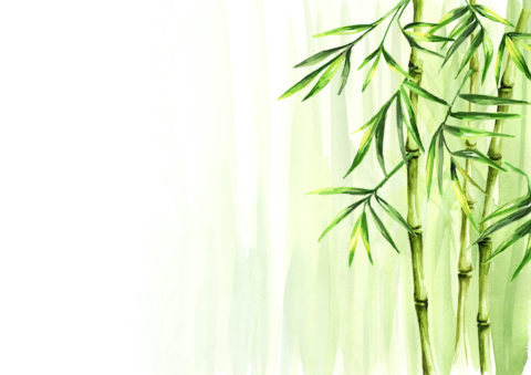 The Culture and History of Chinese Bamboo