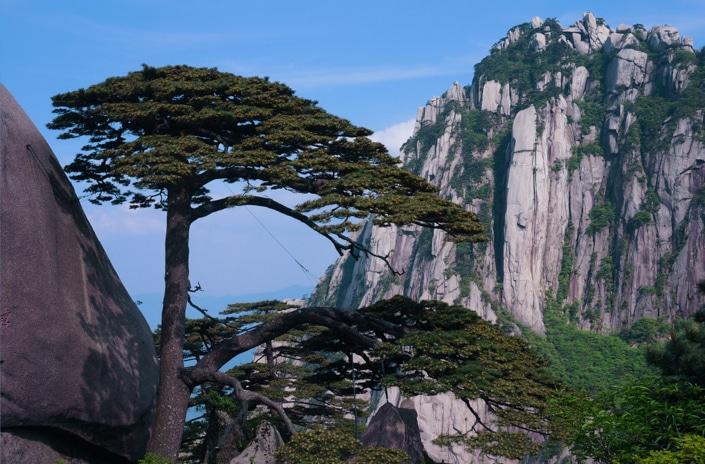 a pine tree in Huangshan, one of the best places to visit in China