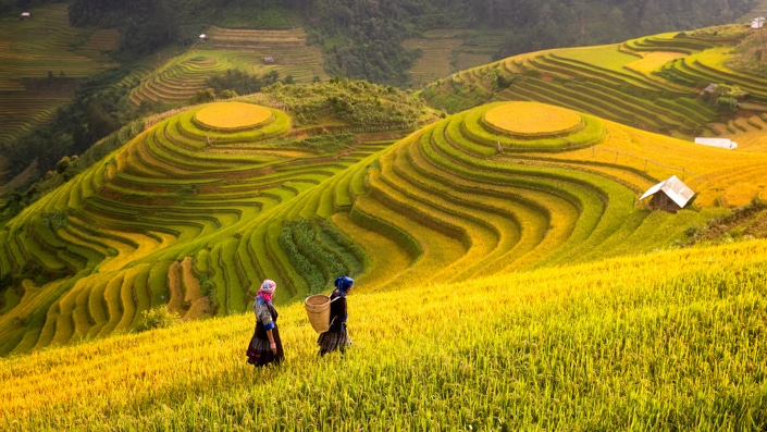 traditional Chinses rice terraces