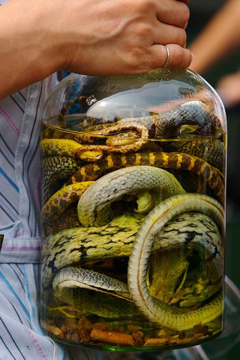 a bottle of snake wine