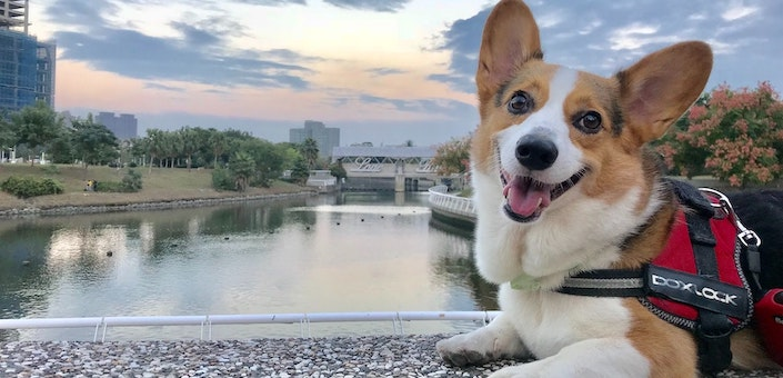 happy dog posing in front of a river