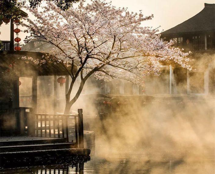 springtime in wuzhen water town